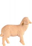 4451 Schaf rechts schauend