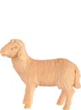 4455 Schaf links schauend